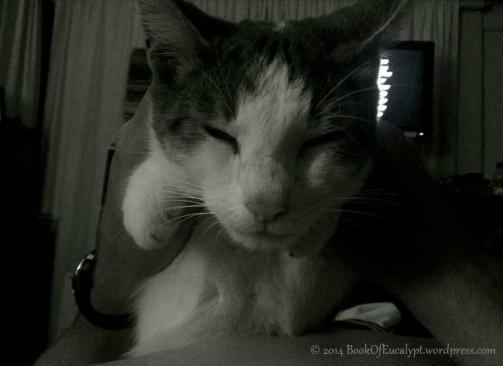 charlie-sleep