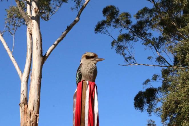 kookaburramaypole